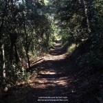 Un bosque fantástico